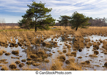 Swamp with trees in a national park - Swamp with trees in...