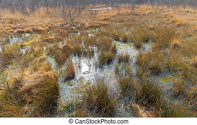 Bog in national park De Groote Peel in The Netherlands