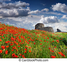 The ruins of the Genoese fortress with a field of blooming...