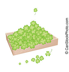 A Lot of Shamrock in Wooden Container