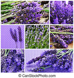 lavender flowers collage - a collage with different picture...
