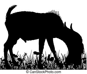 Billy goat  in the meadow