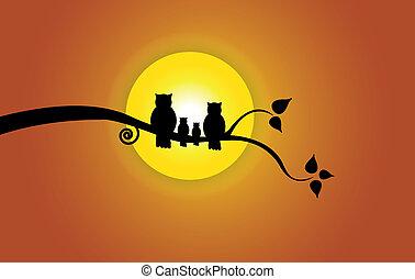 Evening sun, tree leaf and orange sky and owl family...