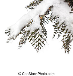 Frozen twig in the snow on white