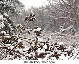 Carámbanos, Ramita, creado, congelación,...