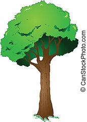 Big leafy tree in summer