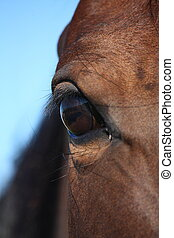 Brown horse eye close up - Beautiful brown horse eye close...