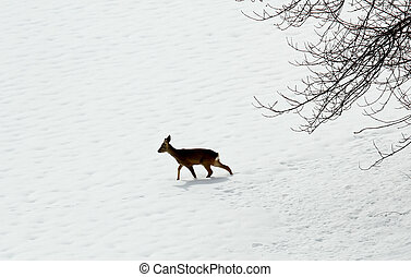 young roe deer amid the snow white in search of food during...