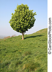 Vertical view of a small tree in an English field.