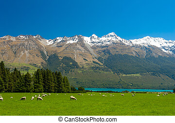 New Zealand mountains - Beautiful landscape of the New...