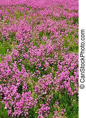 Meadow full of spring flowers