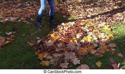 worker rake leaves pile - worker raking neatly with red...
