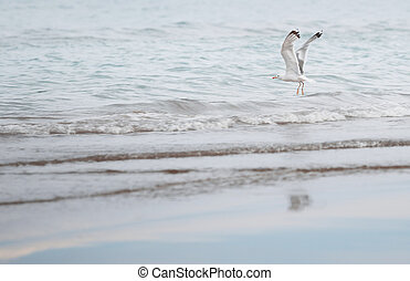 Seagull flying over the sea Horizontal photo