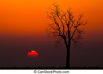 silhouettes of dead tree against sunset background