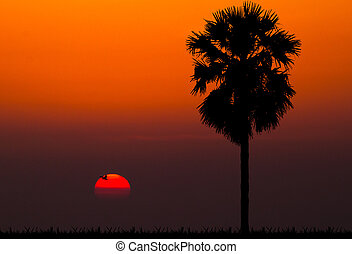silhouettes of palm tree against sunset background