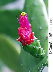 Cactus Flower - Closeup cactus flower