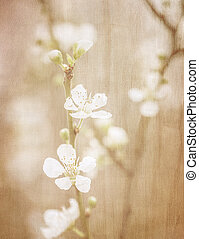 Vintage fine art floral background - Cherry tree blossom,...