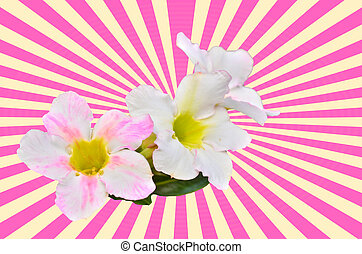 White Desert Flower on vintage pink background