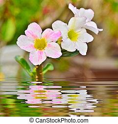 White Desert Flower and reflect