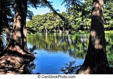 Bald Cypress Trees - Garner state park natural area located...
