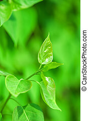 fresh new green leaves and copy spase - fresh new green...