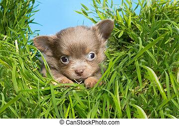 Puppy in high grass