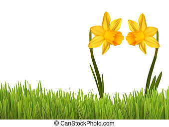 Two Yellow Daffodils in Love on a green Meadow