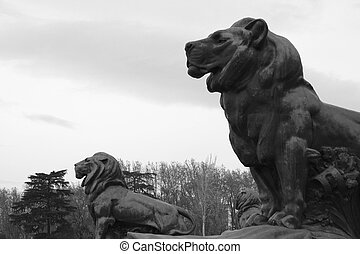 Two lions in the park - View two lions protecting the...