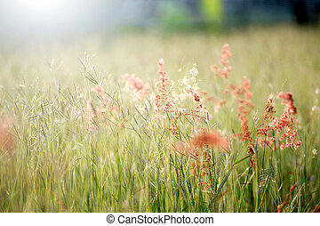 Pink grass And the sun light