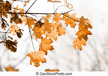 Colorful leaves in the forest - sunny photos