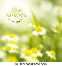 Fresh chamomile, spring background Vector illustration