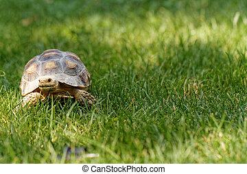 海龜, 很少