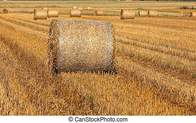 hay bales on filed after harvest, first in focus