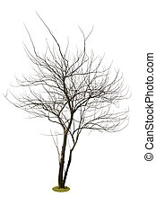 tree on white background, isolate object