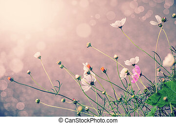 Defocus blur beautiful floral background Purple and white...