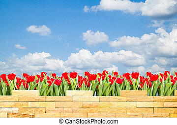 brick wall with beautiful red tulips behind and blue sky background