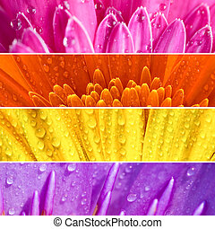 Fresh flower banner. - Collection of different fresh...