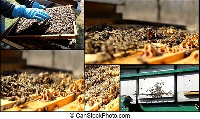 Bees And Hives multiscreen - Beekeeping, Bees And Hives...