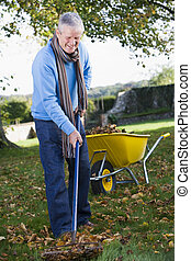 Senior man collecting leaves in garden - Senior man...