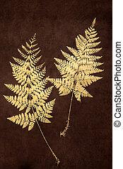 Fern Leaf Beauty