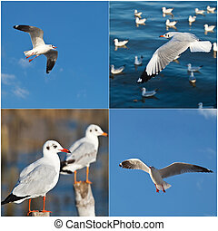 Collection of Seagulls