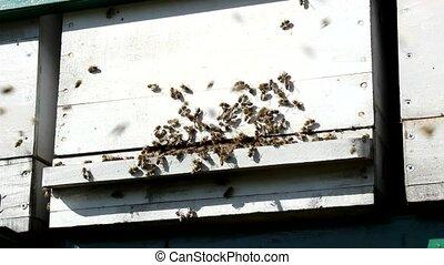 Beekeeping, Bees And Hives ,bees in apiary,beehive,Beekeeper