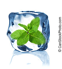 ice cube isolated and mint