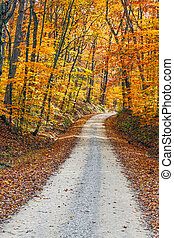 Country Road and Fall Colors
