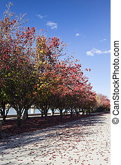 Embankment of Burley Griffin Lake. - Autumn colours....