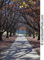Autumn colours. Embankment of Burley Griffin Lake near...
