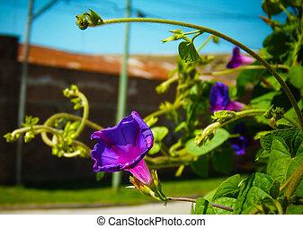flores, flores, paisaje