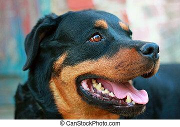 Purebred Dog - Portrait of pedigree dog