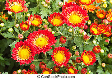 Plant of red flower