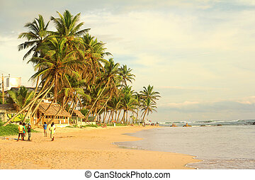 tropical beach with coconut trees